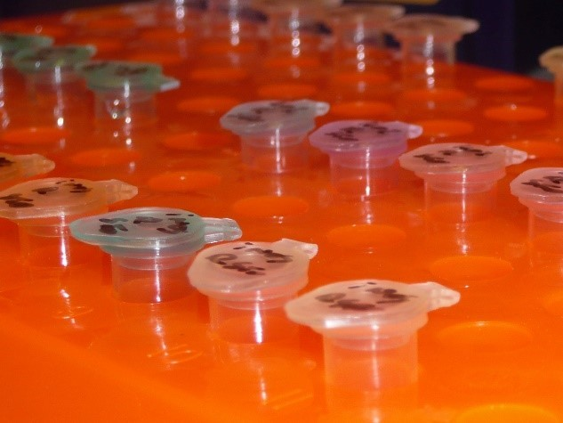 PCR tubes arranged in holder within a lab