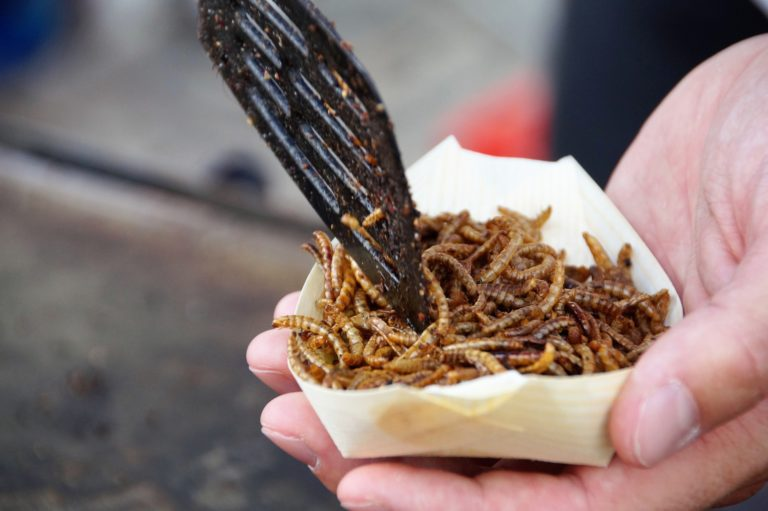 someone holding a takeaway carton filled with fried edible insects