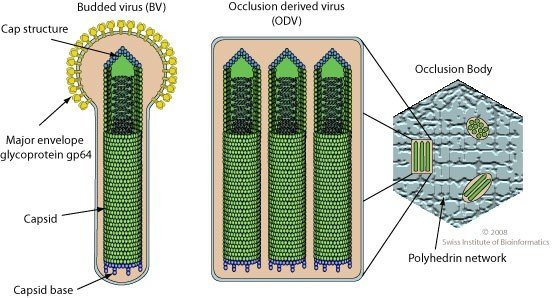 diagram illustrating text below
