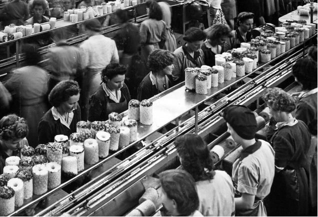 """""""Female workers at the Queensland Tropical Fruit Produce Cannery, Northgate, 6 March 1948"""""""