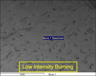 A scanning electron micrograph of bone that has been burned at low intensity. The bone surface shows holes and fractures