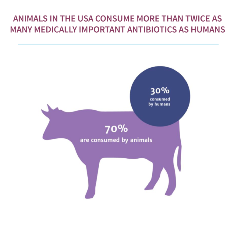 Image of a cow with 70% on its back, and a circle with 30% consumed by humans. This shows that 70% of animals consume medical antibiotics whilst only 30% of humans do.