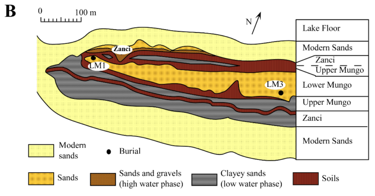 Layers at the sites of LM1 and LM3
