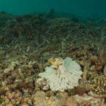 Fl657 Blog Climate Change Australia