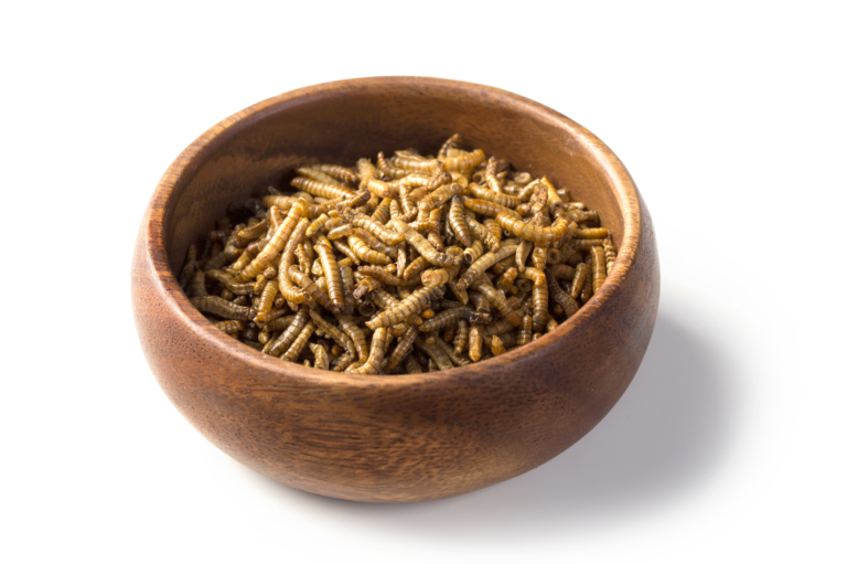 wooden bowl containing mealworms