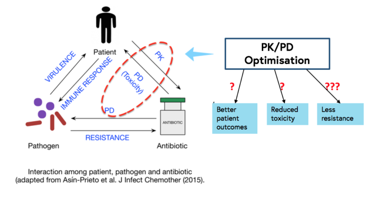 this diagram shows the impact the optimisation of PK/PD may have on the patient by ensuring the correct antibiotic and dose against the right pathogen to improve the patient's immune response to, and reduce the virulence of, the pathogen which may lead to better patient outcomes, reduced toxicity and less resistance.
