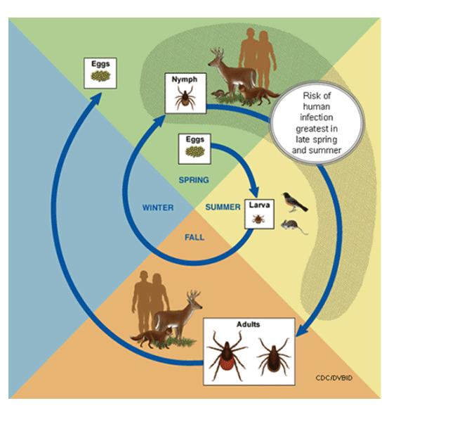 Biology, Habitats and Diseases of Ticks Image 1